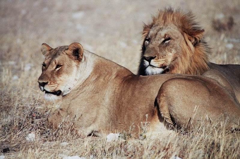 Etosha National Park  Wildlife Tour