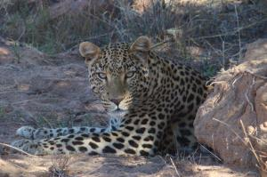 Okonjima AfriCat Foundation