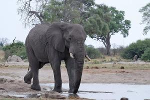12 Day Extreme Wildlife Experience Namibia/ Botswana Tour Packages