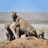 Jewels Of Namibia - Safari Expedition Packages